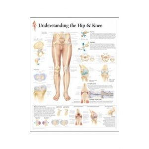 Understanding Hip and Knee