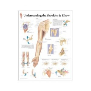Understanding the Shoulder & Elbow Chart Laminated